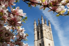 Magnolia Blossom and Magdalen Tower