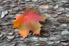 Autumn Leaf, Money Tree