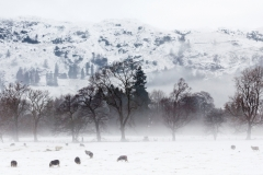 Lake District, Winter Landscape