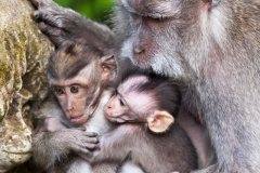 Cute Monkey Family, Ubud