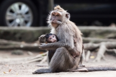 Mother Monkey Holding Baby