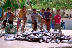Local Boys and Tuna Fish, Maldives