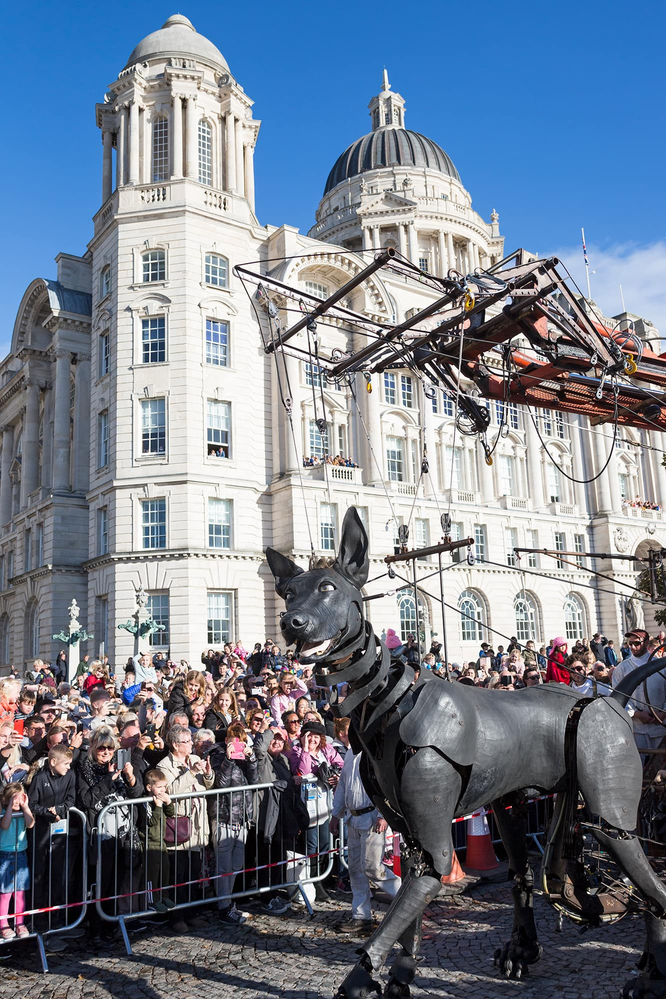 Xolo the giant dog walking past the Port of Liverpool Building